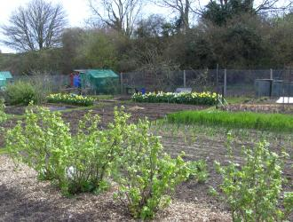 Castle Hill Allotments Ipswich