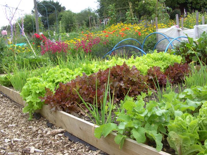 allotment pictures